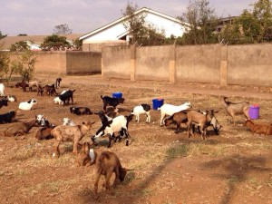 IMG 20141005 WA0021 IMG-20141005-WA0021 - Malawi Relief Fund UK