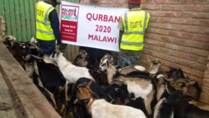 Malawi Relief Fund UK. Qurbani 2020 Photos