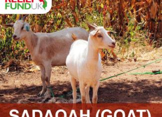 Sadaqah (Goat)
